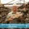 PTP277 - Jeff Chilton Mushroom