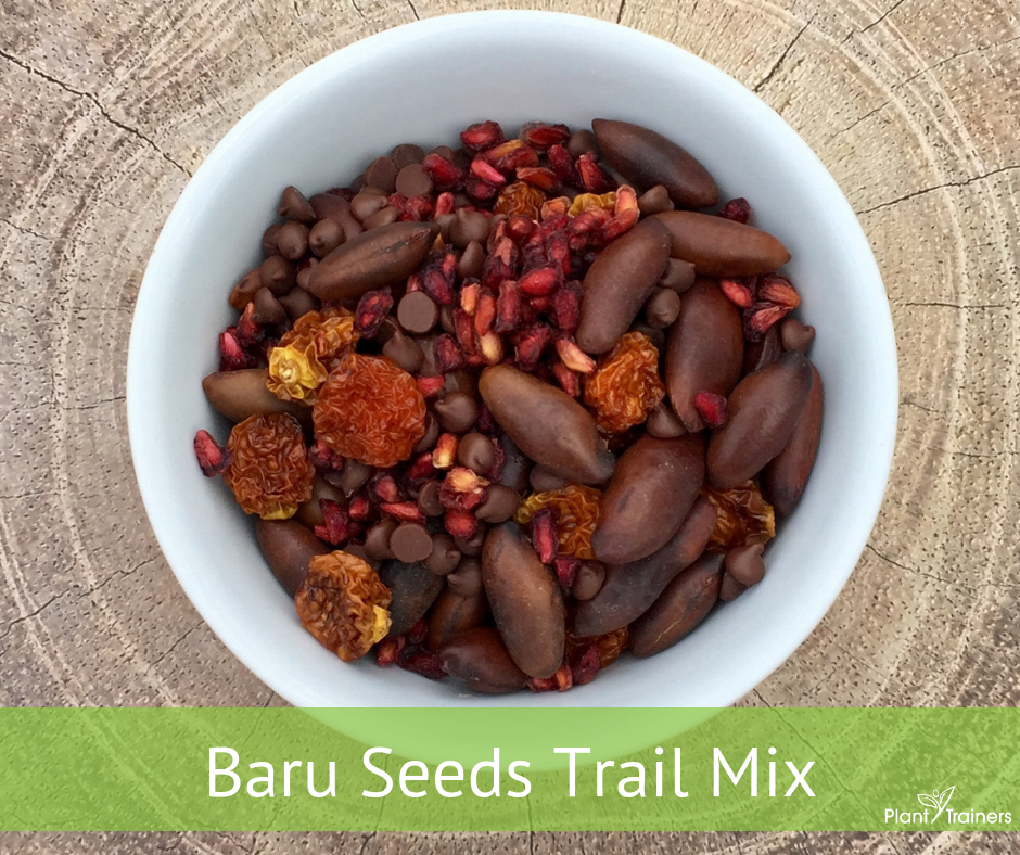 Baru Seeds Trail Mix (100% Nut-Free)